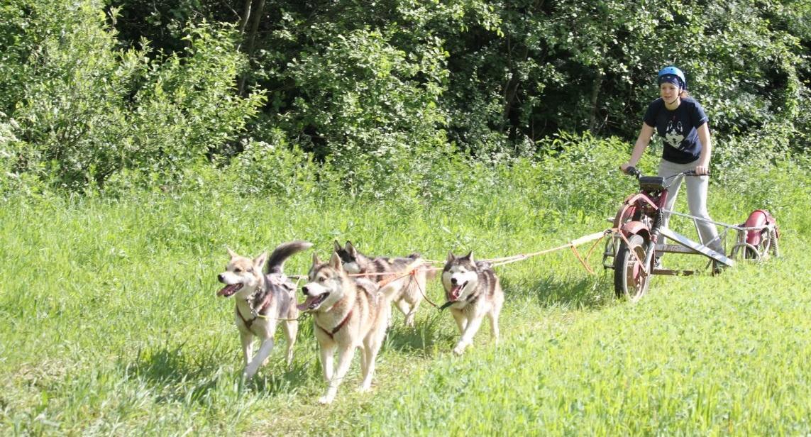 <span>Каюр – это древнее слово, обозначающее погонщика собак</span>