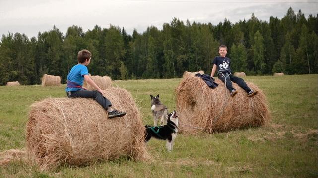 <span>Окунуться в мир природы, пообщаться с собаками</span>
