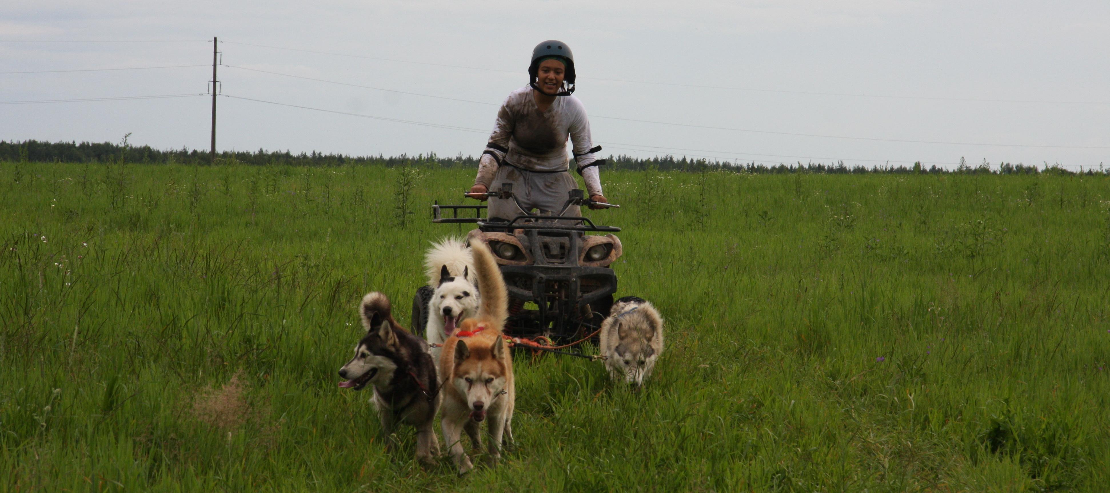 <span>Гонки на собачьих упряжках</span>