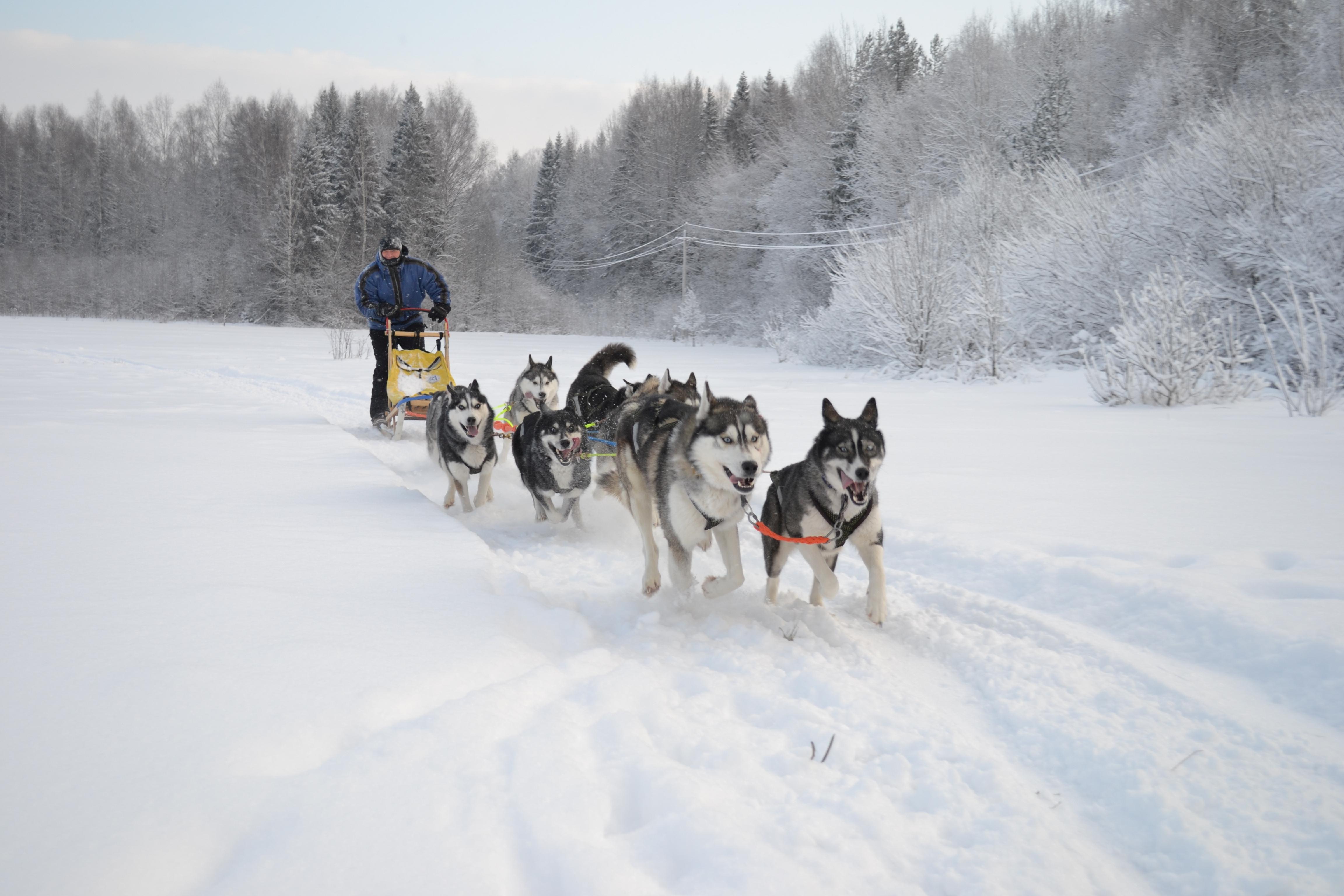 <span>Наша экспедиция – это свежий воздух, брызги снега из под полозьев упряжки, драйв, движение</span>